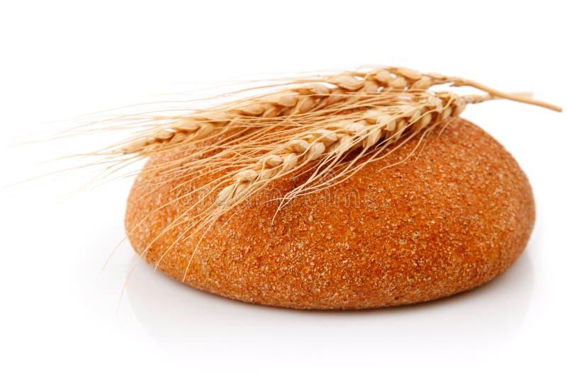 新鲜面包的玉米选拔 免版税库存图片