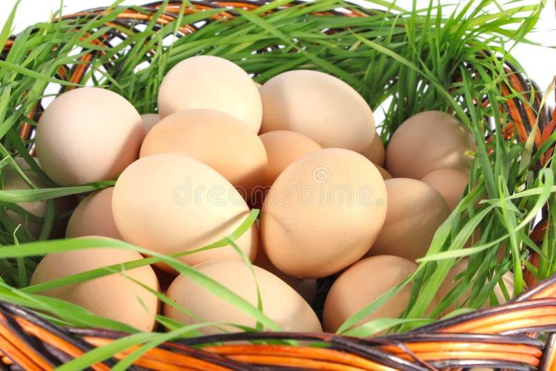 新鲜鸡的鸡蛋 库存照片