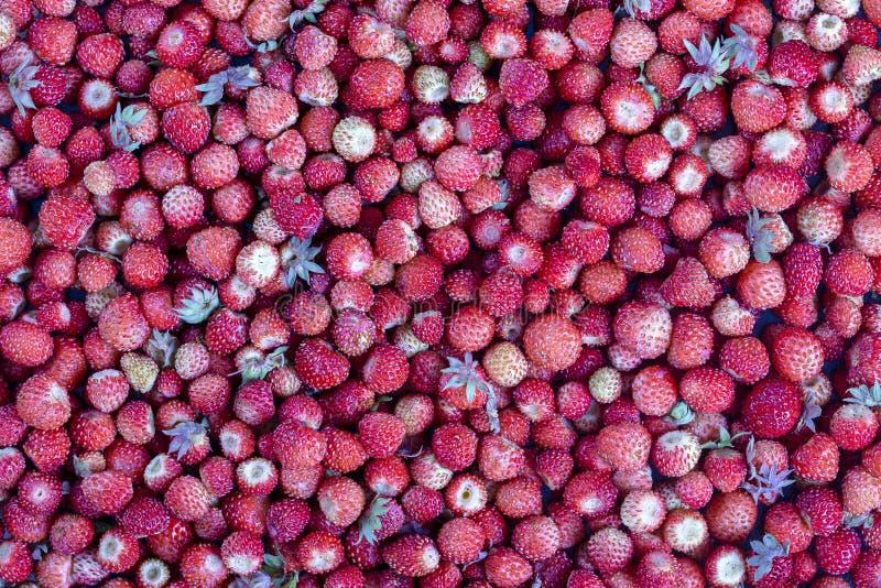 新鲜,成熟,水多的草莓转动,野生莓果 红色草莓背景,顶视图 库存图片
