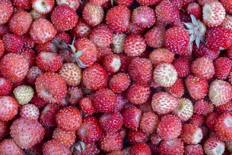 新鲜,成熟,水多的草莓转动,野生莓果 红色草莓背景,顶视图 图库摄影