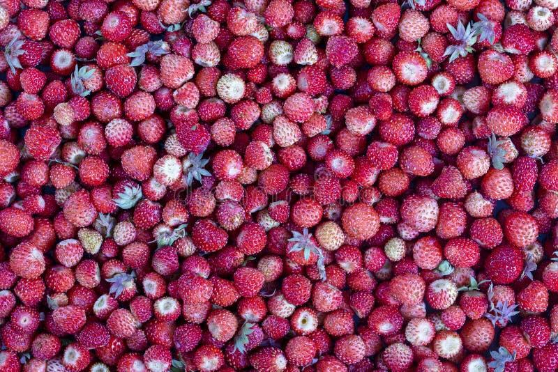 新鲜,成熟,水多的草莓,野生莓果 红色草莓背景,顶视图 图库摄影