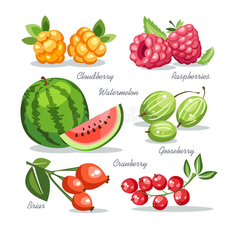 新鲜水果汇集鹅莓野草莓莓西瓜野蔷薇蔓越桔 向量例证