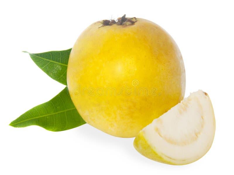 新鲜水果番石榴 库存图片