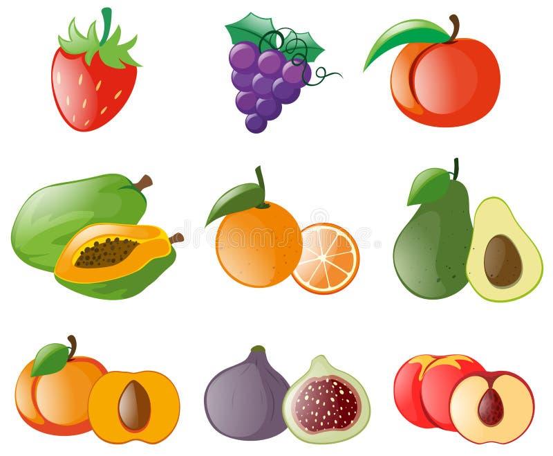 新鲜水果的不同的类型 库存例证