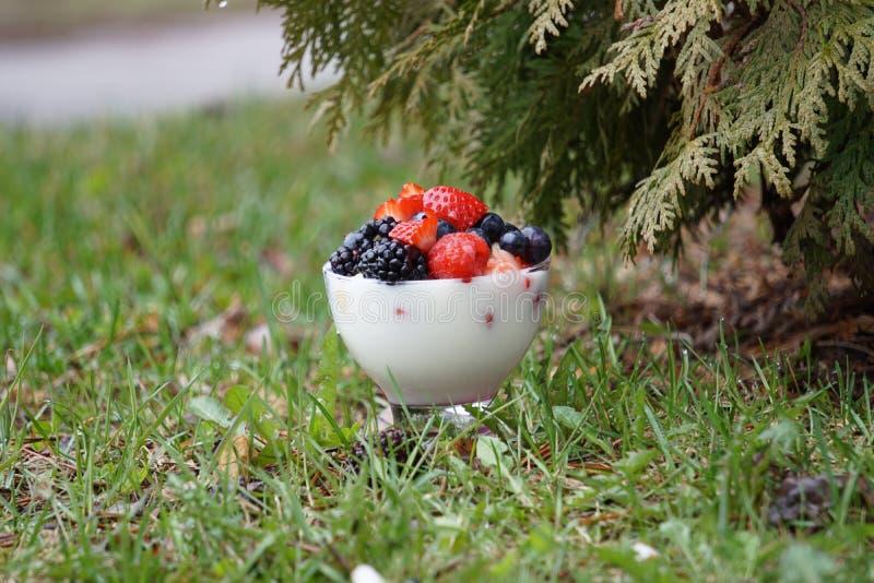 新鲜水果酸奶 库存图片