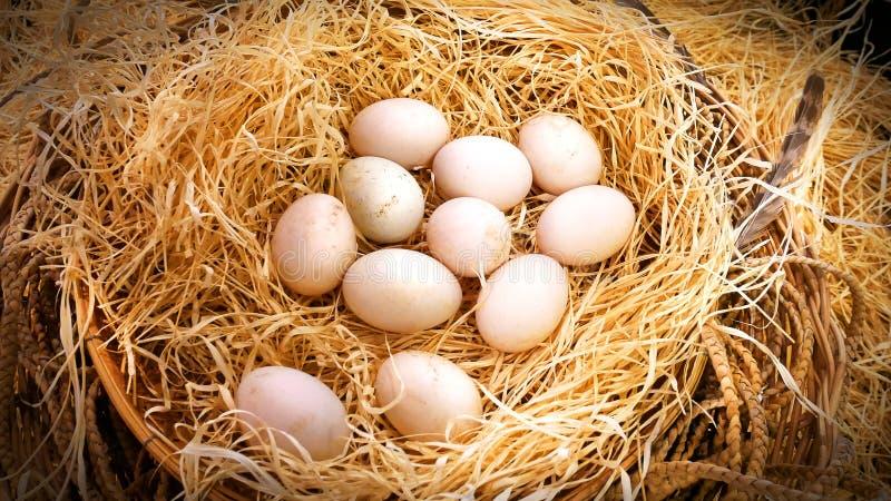 新鸭子` s在干草堆怂恿在农场 免版税库存照片