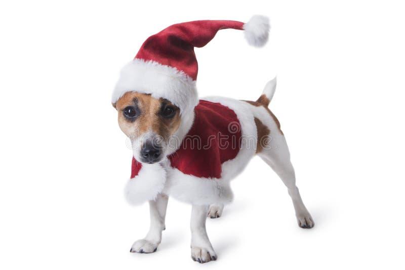 新年和圣诞节宠物 免版税库存图片
