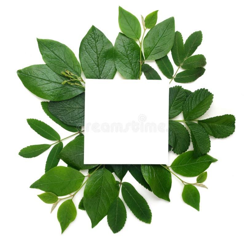 新绿色留下borderon白色 平的位置 顶视图 库存图片
