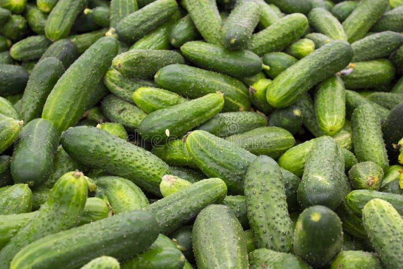 新绿色黄瓜收藏室外在市场宏指令。 库存照片