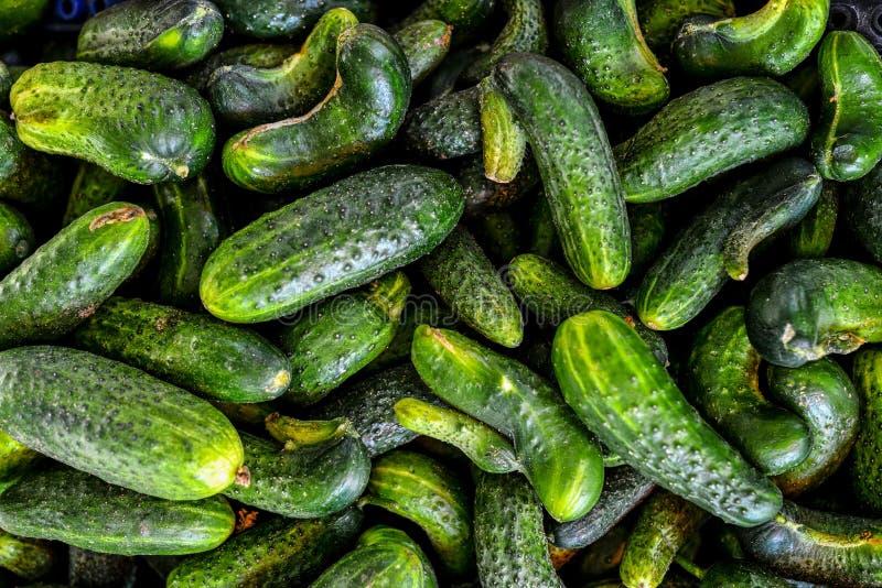 新绿色黄瓜收藏 库存图片