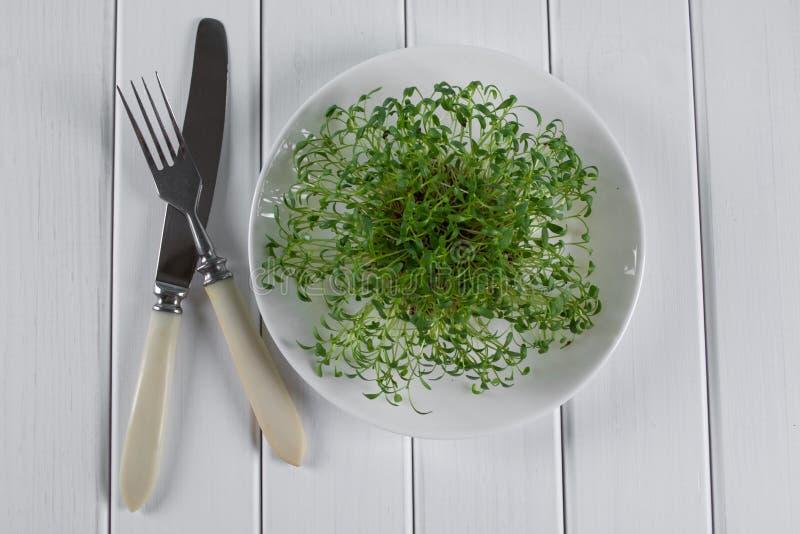 新水芹发芽准备好沙拉 食物健康素食主义者 图库摄影