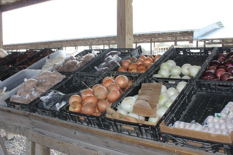 新vagetables在跳蚤市场上 库存图片