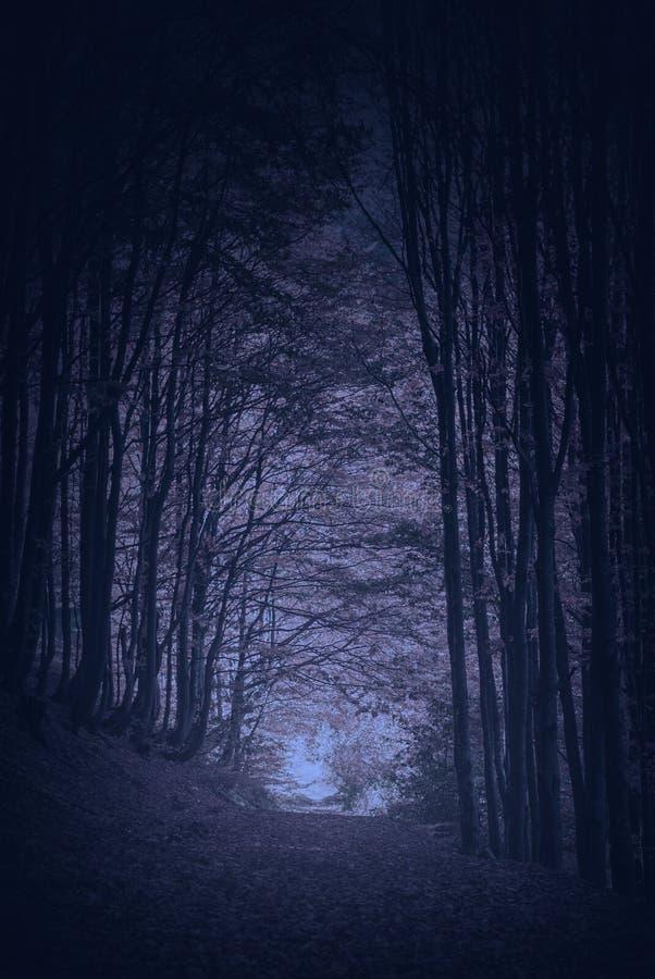方式通过喀尔巴阡山脉的夜森林 免版税库存图片