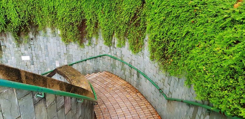 方式顶视图在楼梯下的与绿色不锈钢栏杆和美丽的绿色藤或者爬行物植物在墙壁上 免版税图库摄影