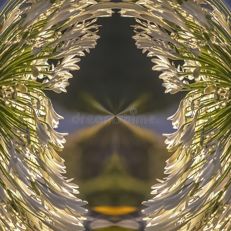 方形的框架花卉设计做了形式照片白花在加利福尼亚 图库摄影