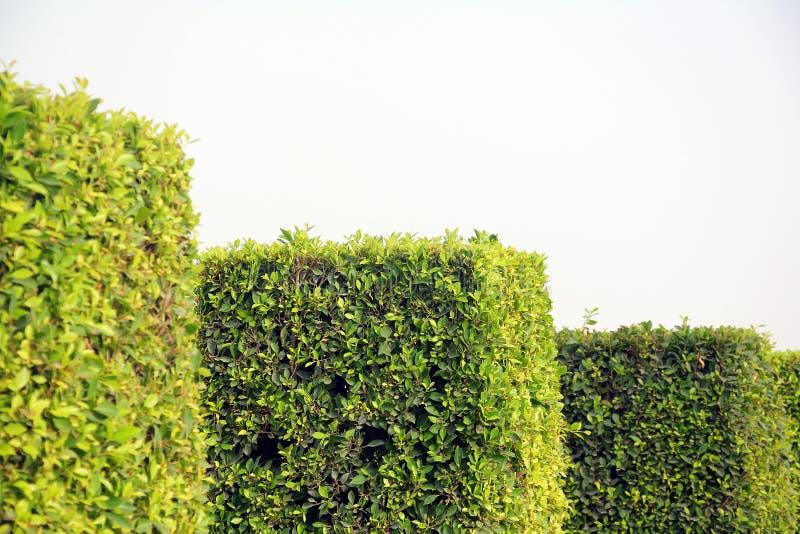 方形的灌木在公园 免版税图库摄影