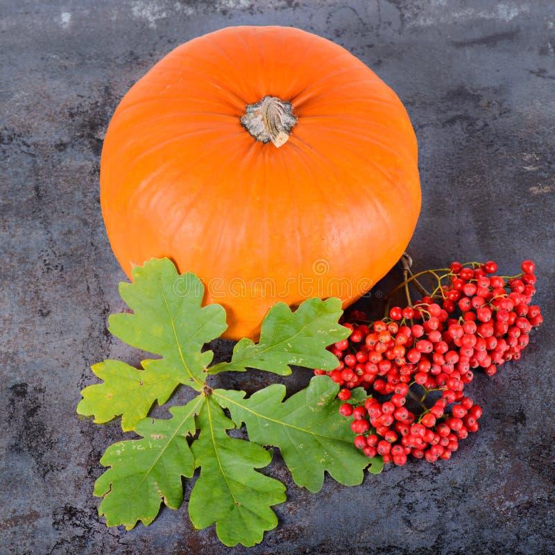 方形的秋天构成 免版税库存照片