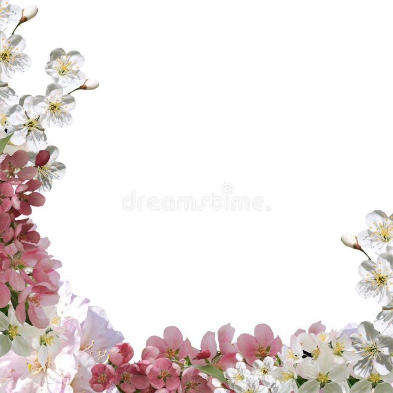 方形的贺卡,春天拼贴画开花 库存照片