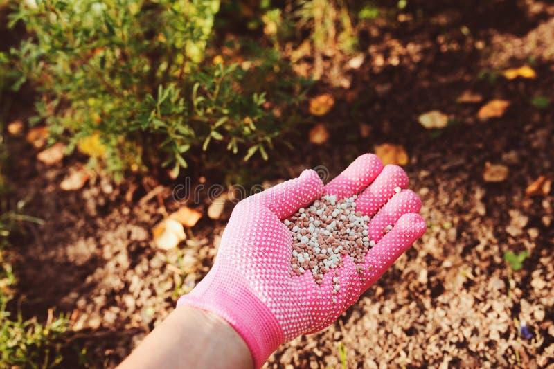 施肥庭园花木在夏天 在手套的花匠手 图库摄影