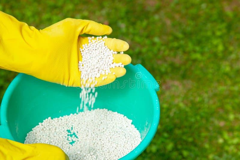 施肥植物、草坪、树和花 手套的花匠拿着在草的白色肥料球 免版税图库摄影