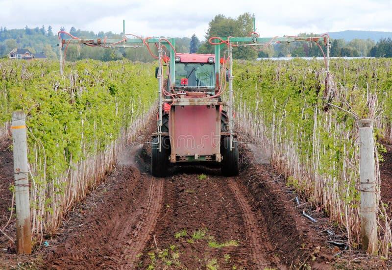 施肥莓农场 免版税库存照片