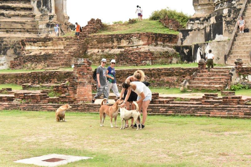 旅客和狗 库存照片