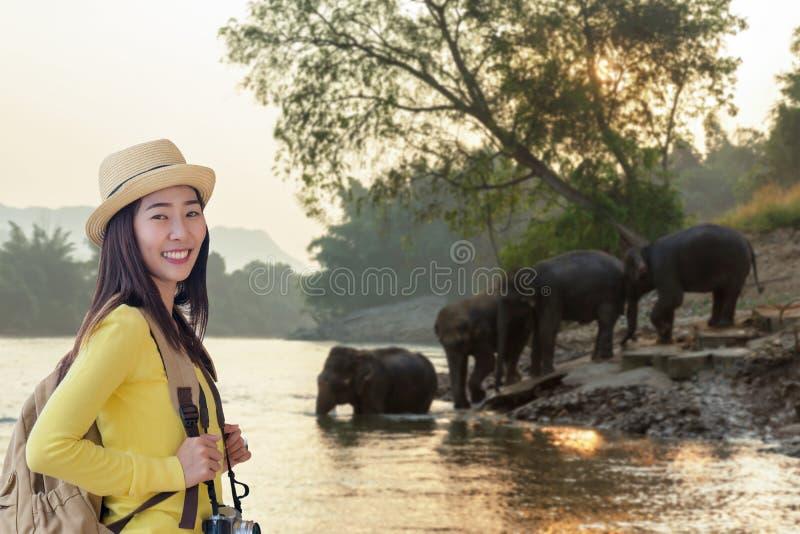 旅游业亚裔妇女挑运看见狂放的大象在美丽的森林里在北碧省在泰国旅行的v 免版税库存图片