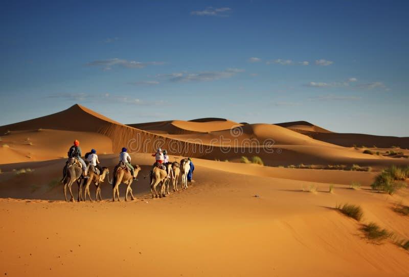旅游业在撒哈拉大沙漠,游人的骆驼迁徙的游览 免版税库存照片