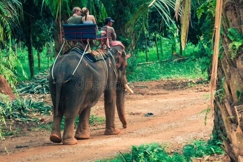 旅游小组乘驾通过大象后面的密林  图库摄影