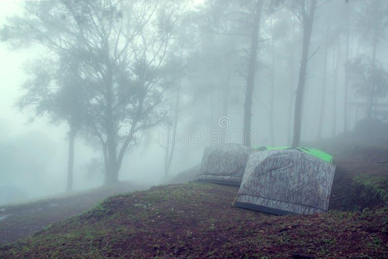 旅游帐篷在有雾的森林里 免版税库存照片