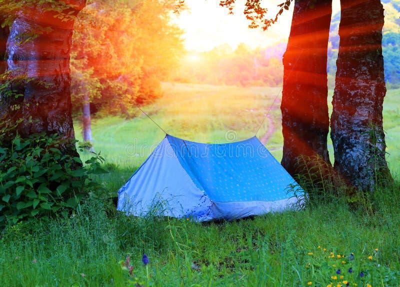 旅游帐篷在森林里 库存照片