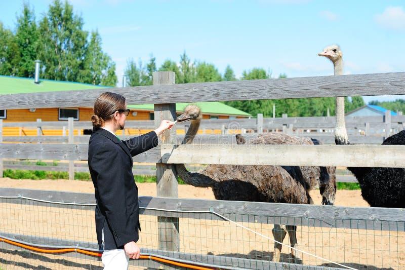 旅游提供的驼鸟 库存照片