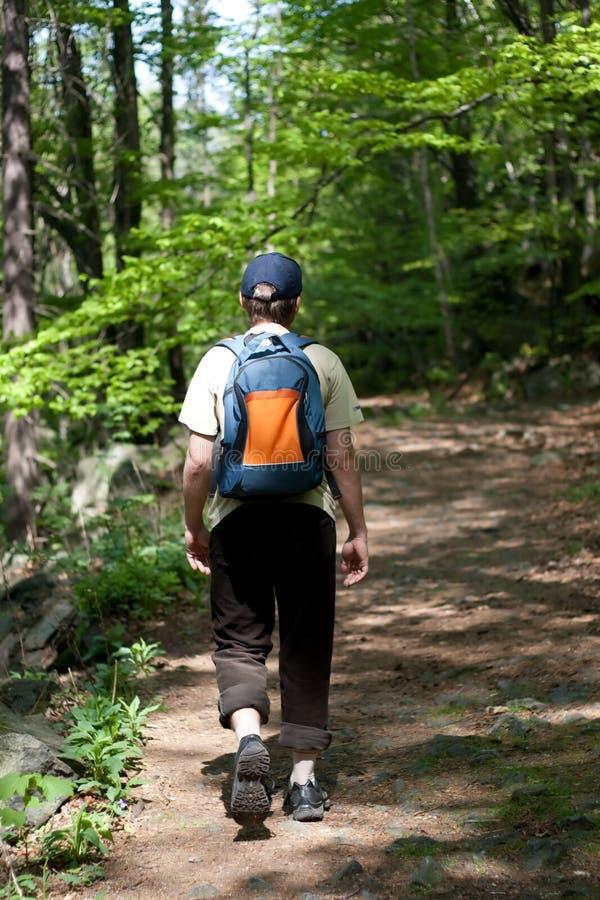 旅游森林 免版税库存图片