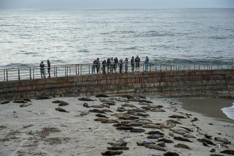 旅游看小睡在日落期间的海狮&封印 库存图片