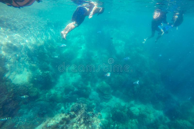 旅游穿戴救生衣,在海喜欢潜航在海、游人和鱼小组,夏天在酸值张,桐艾府的海滩假日, 库存照片