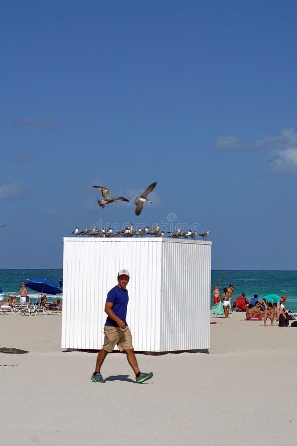 旅游走在南海滩在迈阿密 库存照片