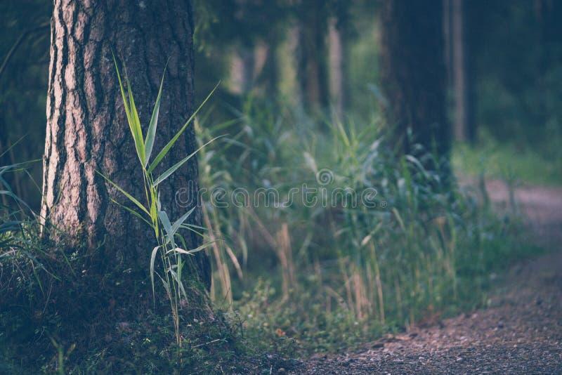 旅游远足足迹在不可思议的喜怒无常的森林-部分被弄脏的旅行的照片、概念和旅游业 免版税库存照片