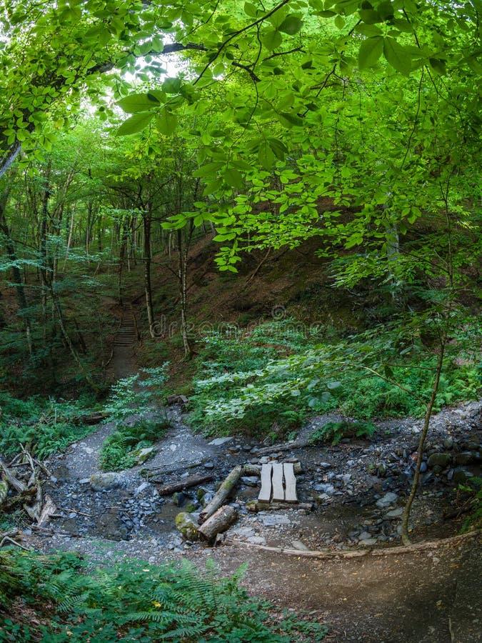 旅游道路和小河在夏天山森林里 免版税库存照片