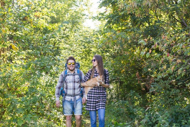 旅行、冒险、远足、旅游业和自然概念-旅游加上走在森林的猫 库存照片