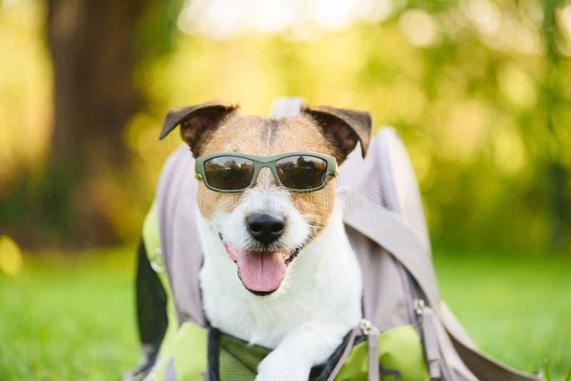 旅行、夏天和喜悦与狗概念-来狗佩带的太阳镜宠物物品袋 免版税库存图片
