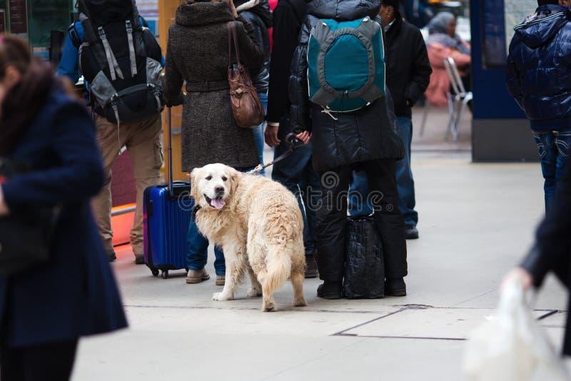 旅行与狗 图库摄影