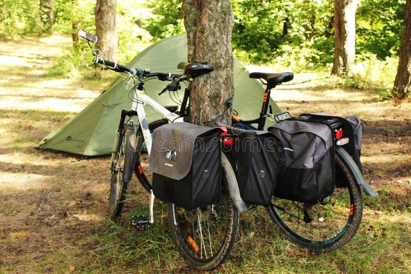 旅行乘自行车和野营在杉木森林里 免版税库存图片