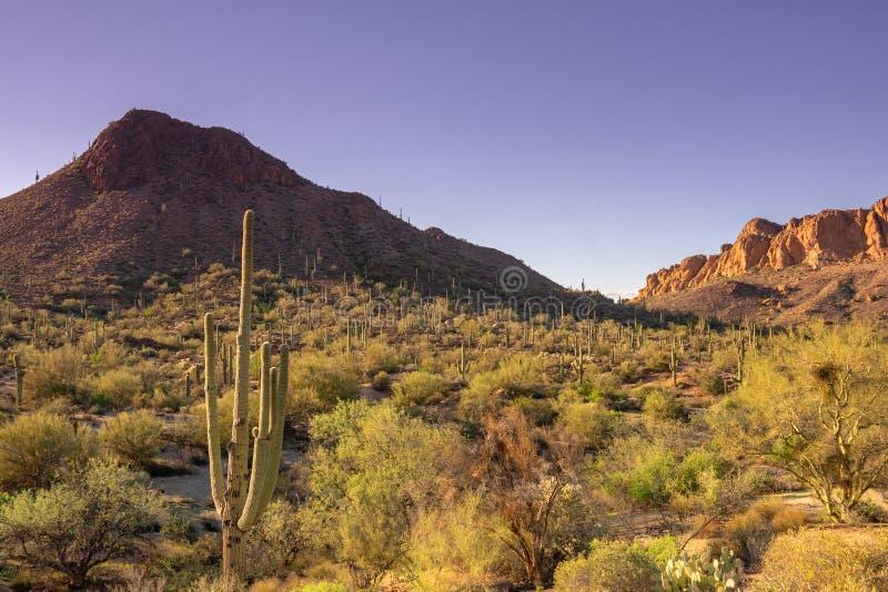 旅行亚利桑那风景沙漠风景旅游业照片,美国 免版税图库摄影