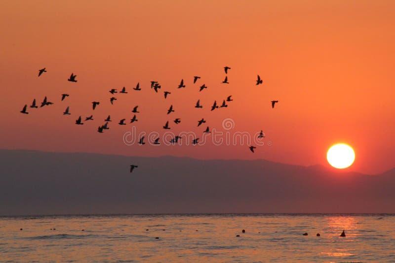 旅行在日出的鸟 库存图片