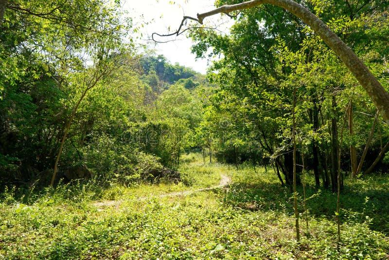 旅行泰国-路在森林在Khao Nang在查家上午的Panthurat森林公园 库存照片
