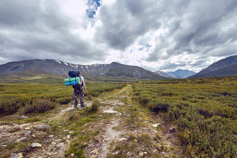 旅途徒步通过山谷 野生生物秀丽  阿尔泰,路向Shavlinsky湖 高涨 免版税库存照片