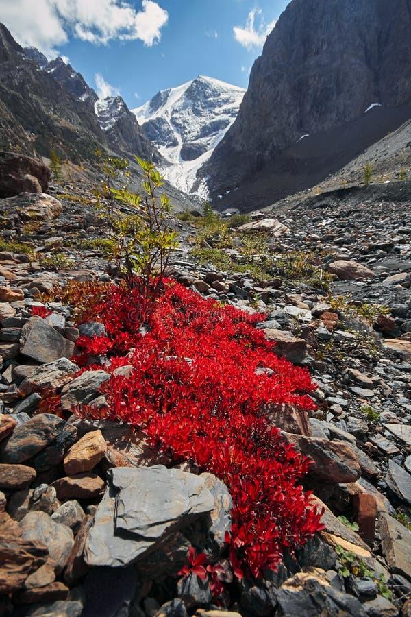 旅途通过对Aktru的阿尔泰山 远足对阿尔泰山多雪的山峰  在苛刻的情况的生存,美好的自然 免版税库存照片