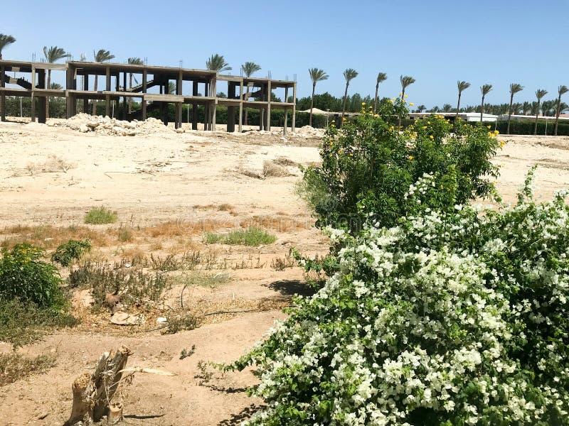 旅馆,以热带棕榈树为背景的一个大厦的建筑在沙漠在露天下,热带,如此 库存图片