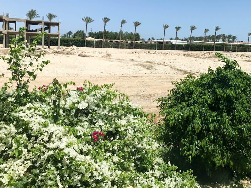 旅馆,以热带棕榈树为背景的一个大厦的建筑在沙漠在露天下,热带,如此 免版税图库摄影