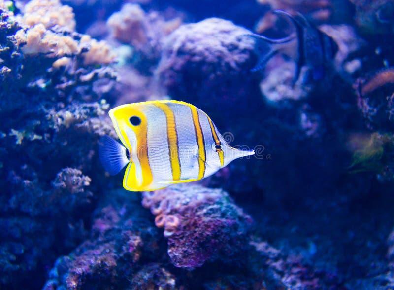 水族馆五颜六色的鱼 免版税库存图片